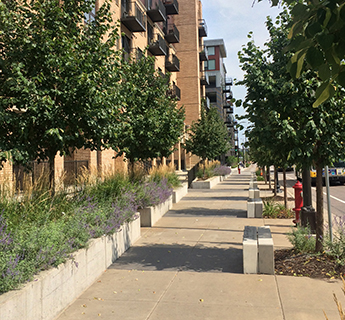 Native plants along sidewalk